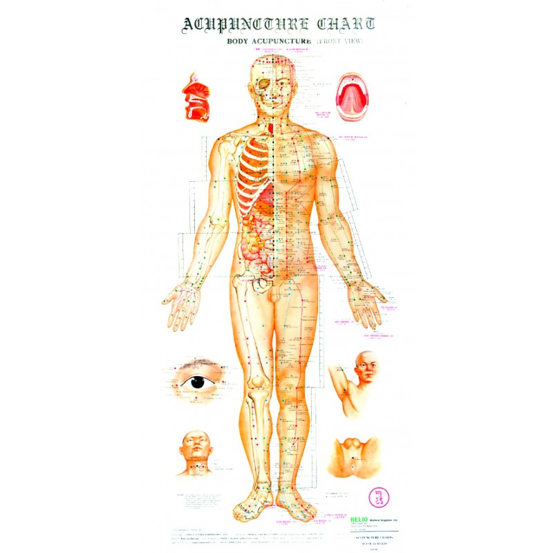 Acupuncture Wall Chart Set BC-101