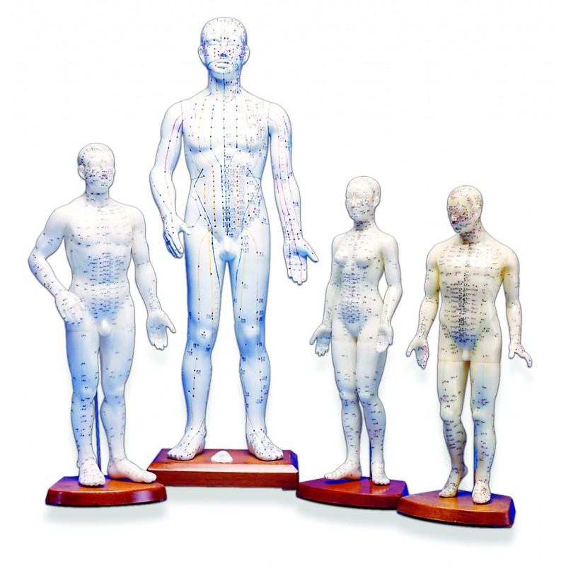 """18"""" Male, Acupuncture Meridian Point Model HM-01"""