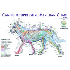 Dog (Canine) Meridian Chart BC-130