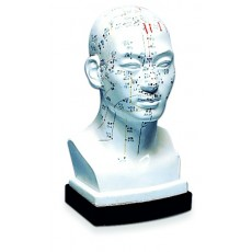 Human Head Models HM-05