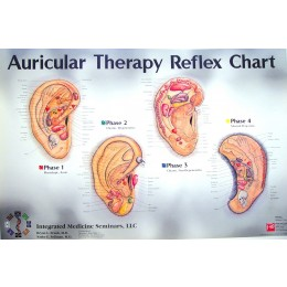 Auricular Therapy Reflex Chart BC-111