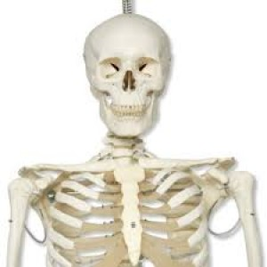 Classic Skeleton Model-Stan
